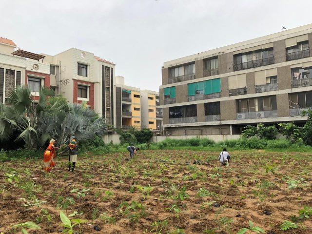 o2h community urban forest tree plantation